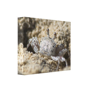 count tended fabric crab canvas prints