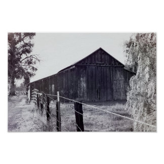 Country Collection - Standing Alone Poster