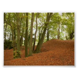 COUNTRY FOREST SCENE POSTER