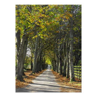 Country lane in Jersey Poster