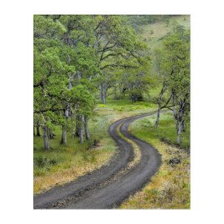 Country road through trees, Oregon Acrylic Print
