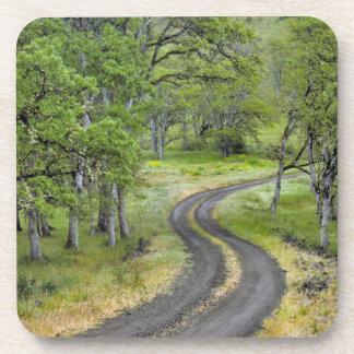 Country road through trees, Oregon Beverage Coaster