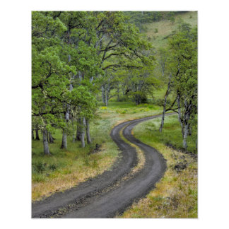 Country road through trees, Oregon Poster