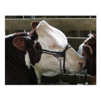 County Fair Cow Postcard