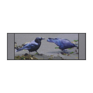 Coupla Crows Beachcombing Canvas Print
