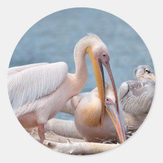 Couple of White pelicans on nest Round Sticker