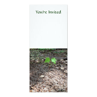Courage of a Sapling 10 Cm X 24 Cm Invitation Card