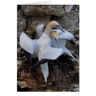 'Courting Gannets' Card