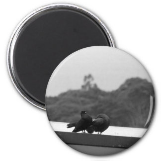 Courting Pigeons Magnet
