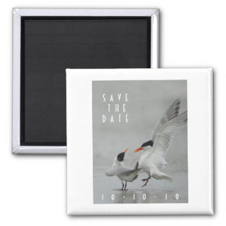 Courting Royal Terns,   Save the Date Magnet