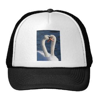 Courting Swans Cap