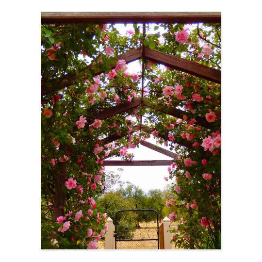 Covered Flower Walkway Postcard