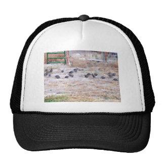 Covey of Quail Trucker Hats