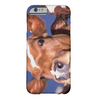 cow 2 barely there iPhone 6 case