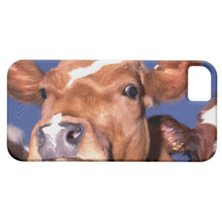 cow 2 case for the iPhone 5