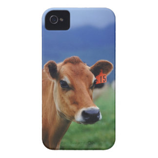 cow 2 iPhone 4 Case-Mate case