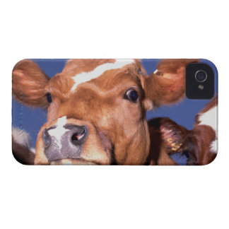 cow 2 iPhone 4 covers