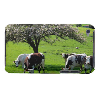 Cow among blooming apple trees in Normandy iPod Touch Cases