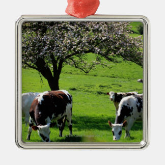 Cow among blooming apple trees in Normandy Silver-Colored Square Decoration