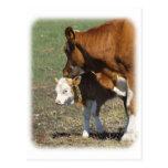 Cow and Calf 9P022D-160 Postcard