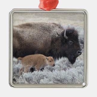 Cow and Calf Bison, Yellowstone 2 Christmas Ornament