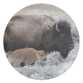 Cow and Calf Bison, Yellowstone 2 Plate