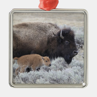 Cow and Calf Bison, Yellowstone 2 Silver-Colored Square Decoration