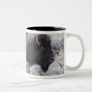 Cow and Calf Bison, Yellowstone 2 Two-Tone Coffee Mug