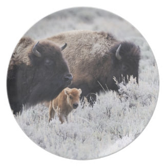 Cow and Calf Bison, Yellowstone Dinner Plate