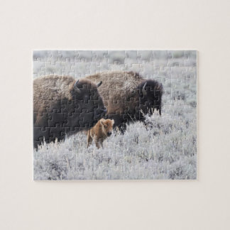 Cow and Calf Bison, Yellowstone Jigsaw Puzzle