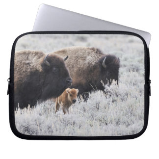 Cow and Calf Bison, Yellowstone Laptop Computer Sleeves