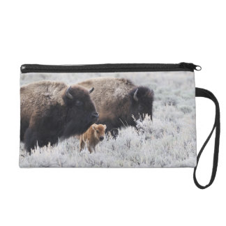 Cow and Calf Bison, Yellowstone Wristlet