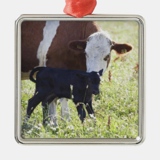 Cow and calf christmas ornament