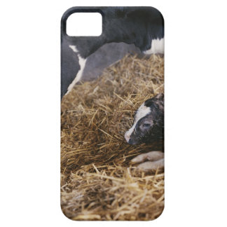 Cow and Calf in Hay Case For The iPhone 5