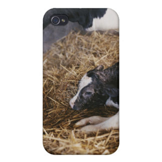 Cow and Calf in Hay iPhone 4 Cover