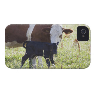 Cow and calf iPhone 4 Case-Mate case