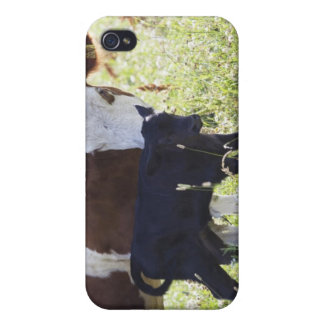 Cow and calf iPhone 4 cover
