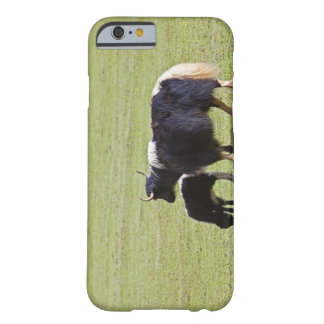 Cow and calf Yak, Lijiang Barely There iPhone 6 Case