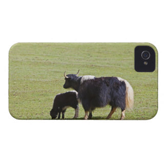 Cow and calf Yak, Lijiang Case-Mate iPhone 4 Case