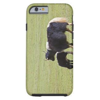Cow and calf Yak, Lijiang Tough iPhone 6 Case