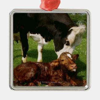 Cow and newborn calf christmas ornament