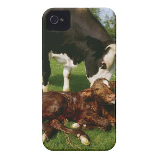Cow and newborn calf iPhone 4 cover