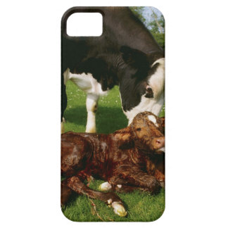 Cow and newborn calf iPhone 5 cover