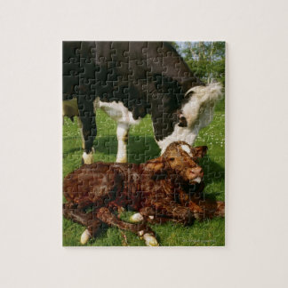 Cow and newborn calf jigsaw puzzle