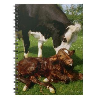 Cow and newborn calf notebook
