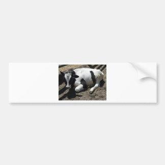 cow,baby bumper sticker