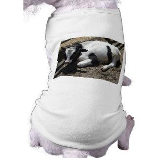 cow baby pet tshirt