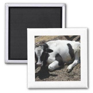 cow baby fridge magnet