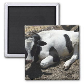 cow,baby square magnet