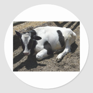 cow baby round stickers